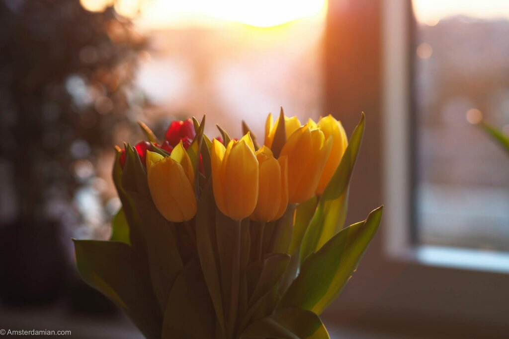Spring in my home 10