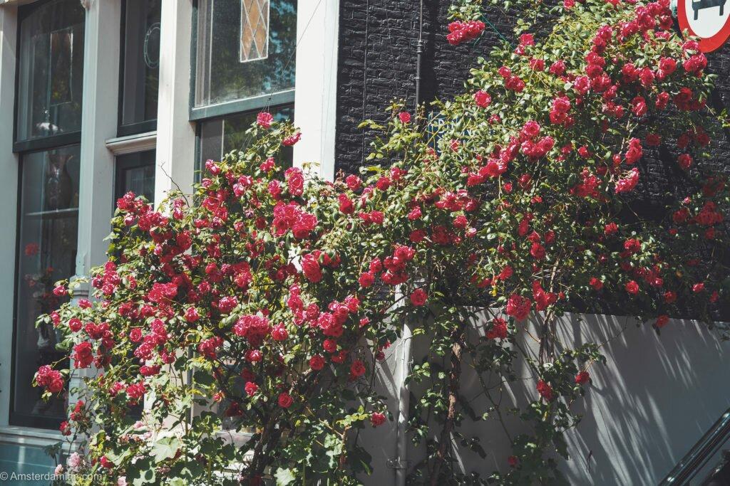 A nostalgic visit to Amsterdam 03