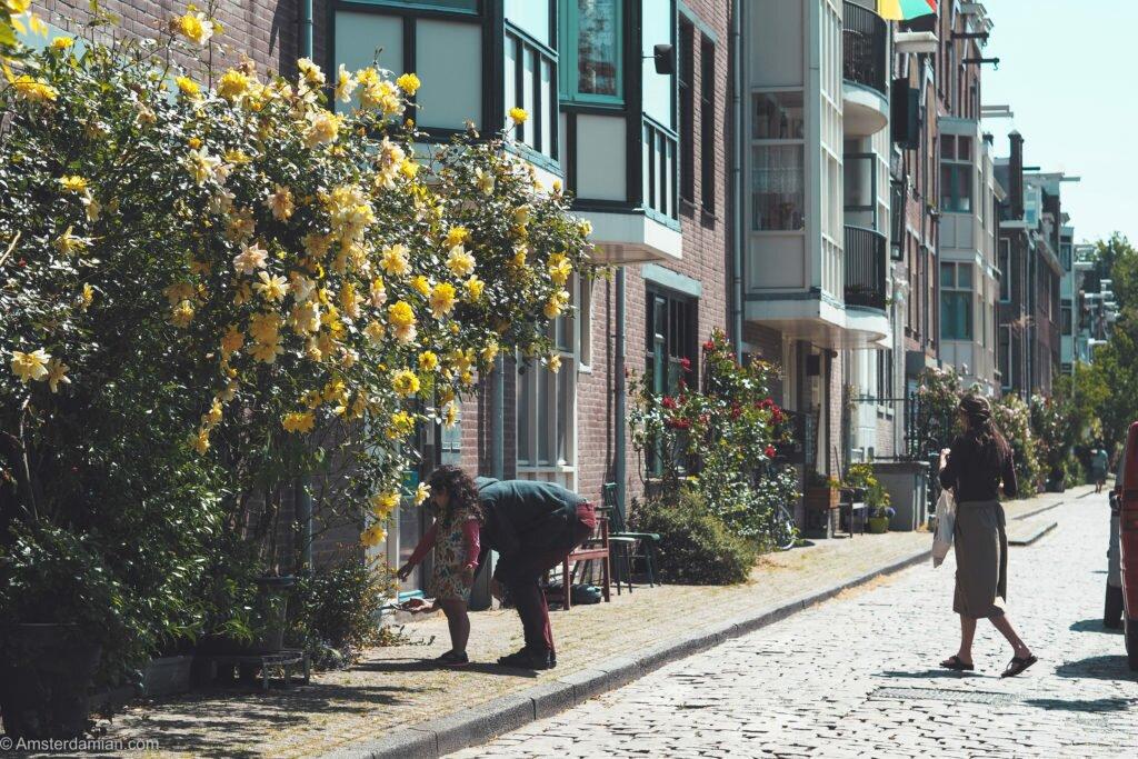 Streets of Prinseneiland 02