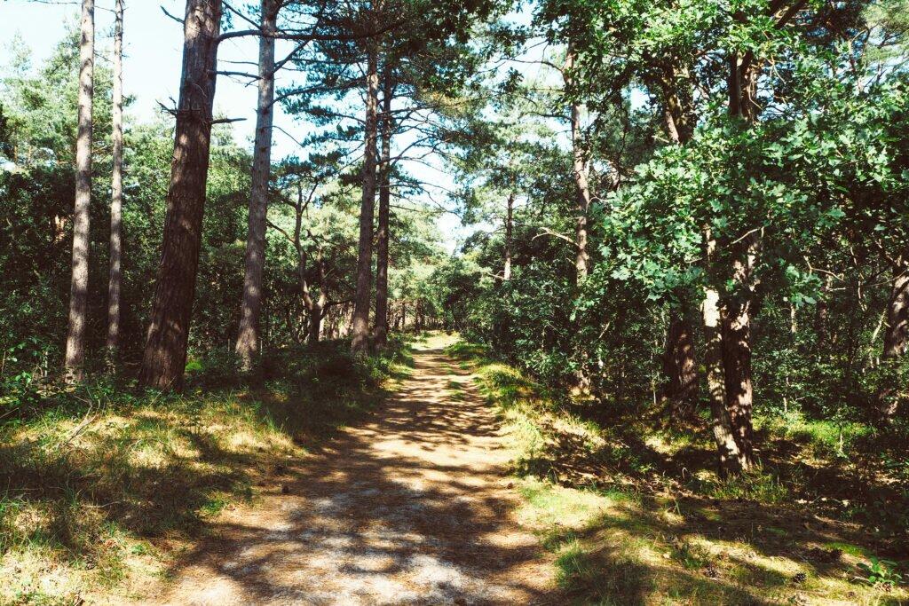 Schoorl forest