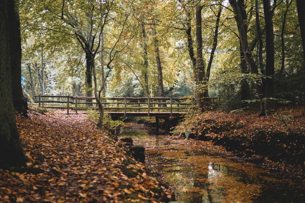 Bergerbos in Autumn