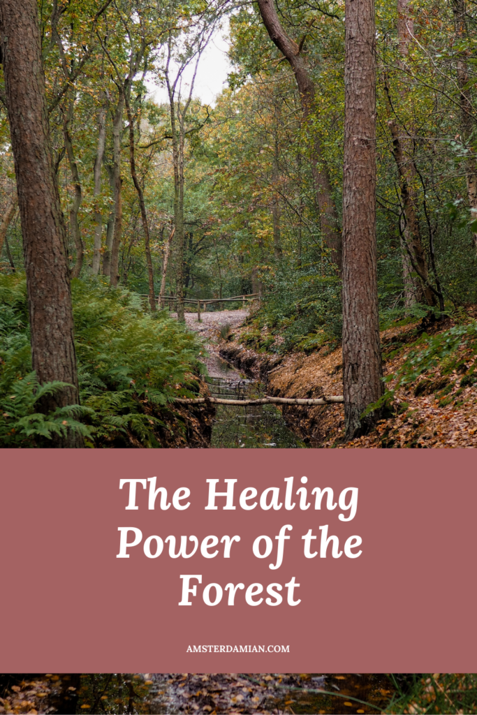The healing power of the forest