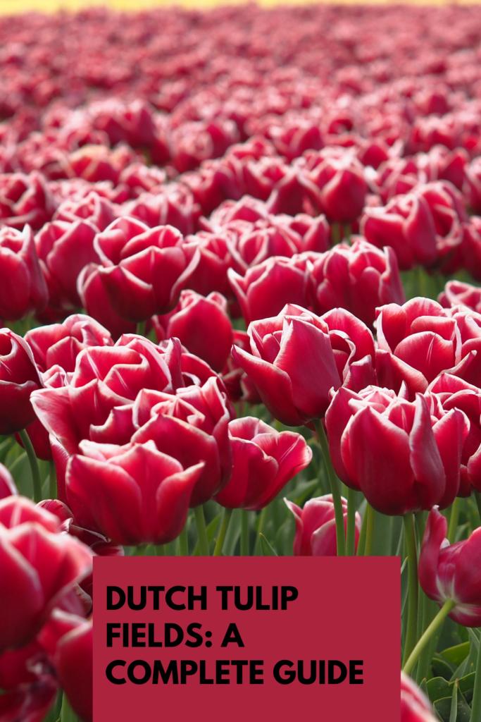 Tulip fields pinterest