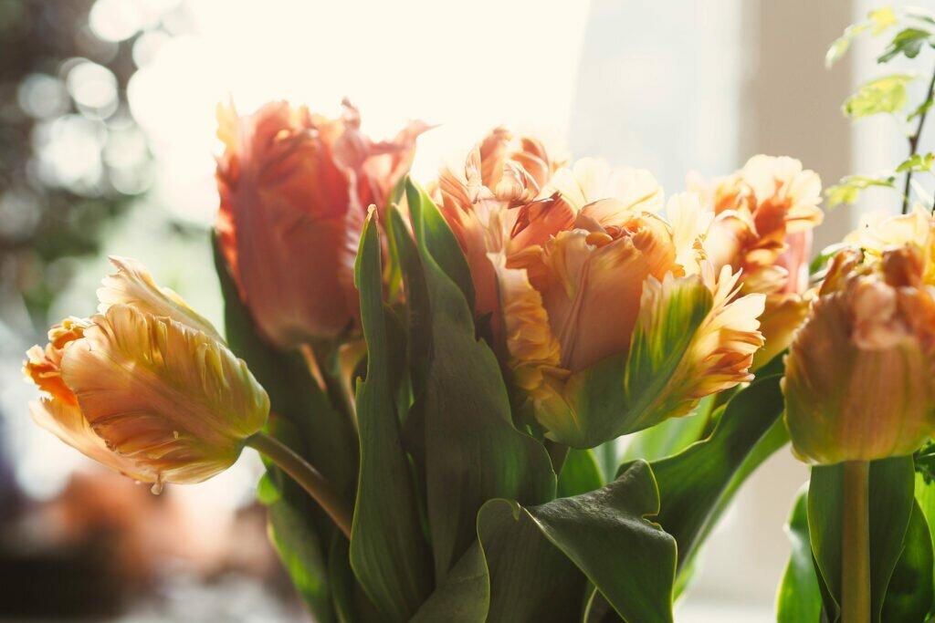 Tulip fields 07