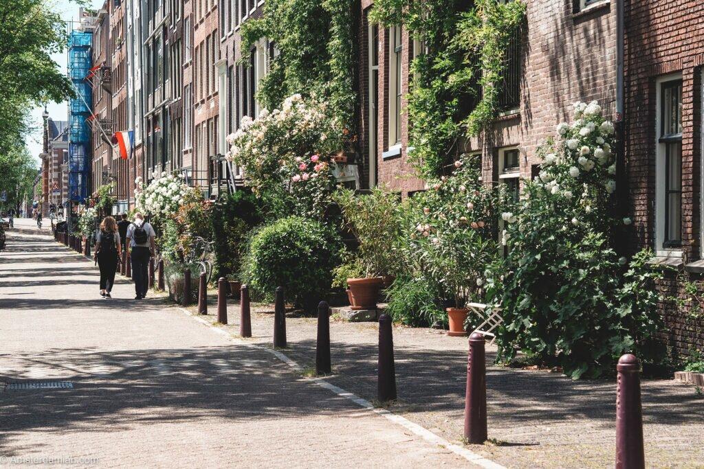 Roses in Amsterdam 13
