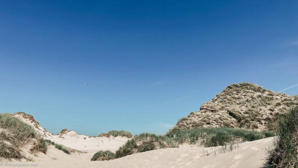 dunes egmond aan zee