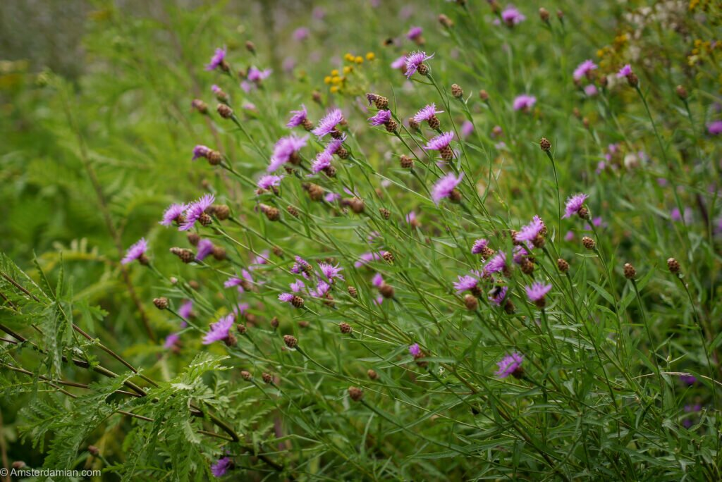 Wild flowers Frankendael