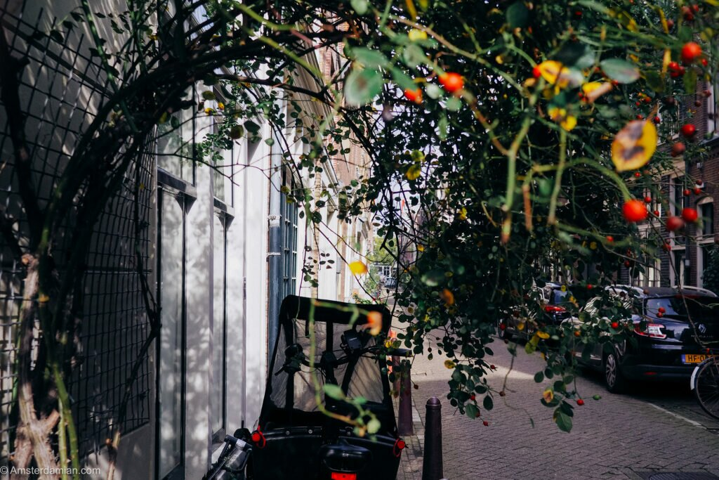 October in Amsterdam 02