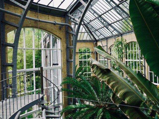Green spot in Amsterdam: Hortus Botanicus