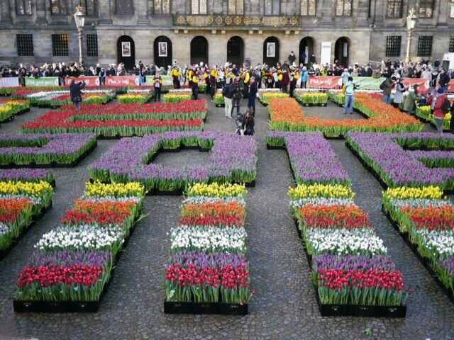 National Tulip Day 2016