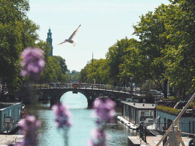 Nostalgic visit to Amsterdam
