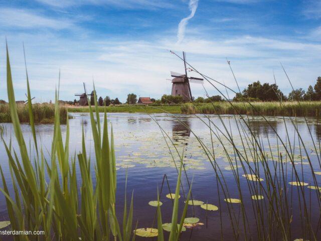 Green Netherlands: Oudorperhout