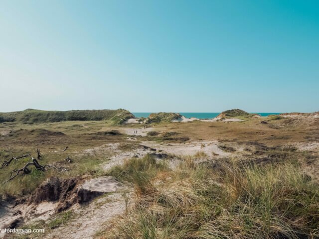 Visiting Schoorl Dunes and the story of the dried heather