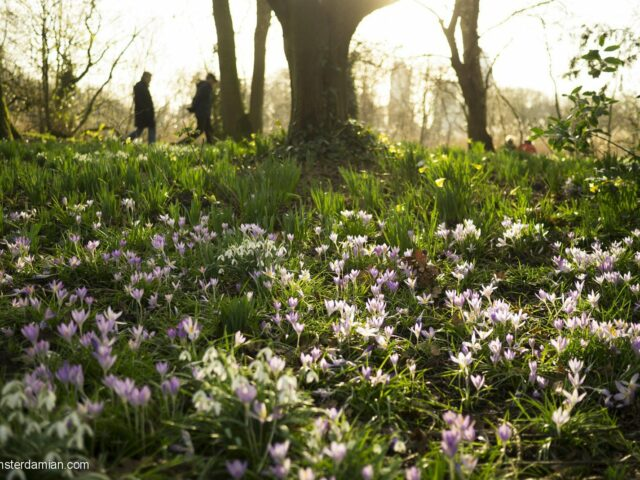 Signs of spring in Frankendael park