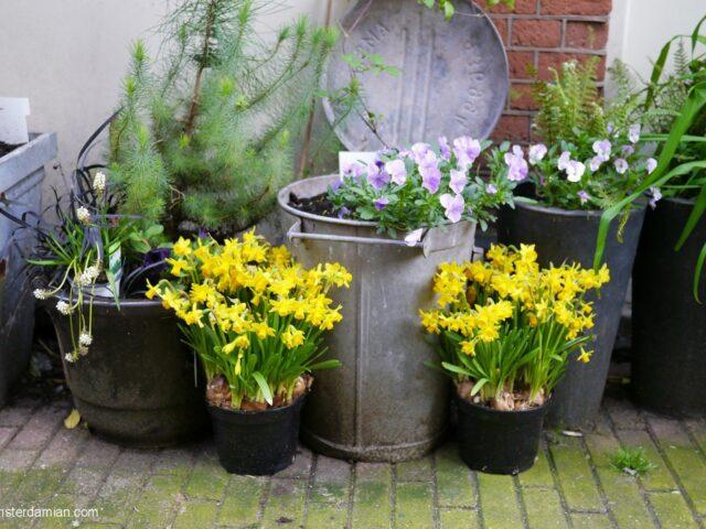 Spring time in the Jordaan