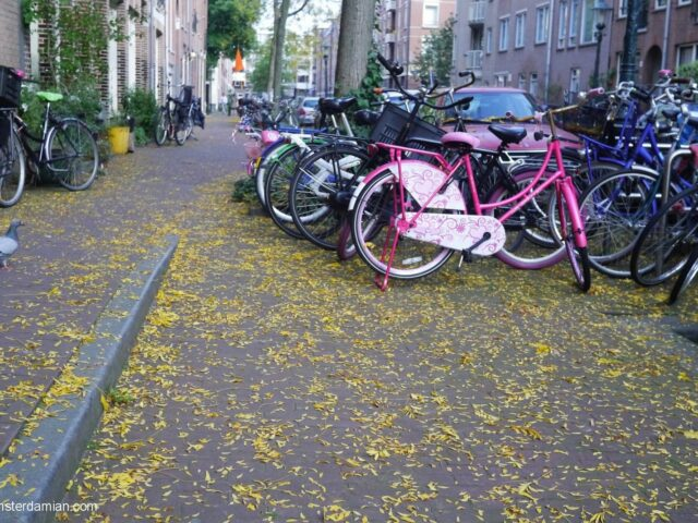 The streets of Staatsliedenbuurt