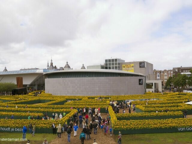 A sunflower labyrinth at Van Gogh museum