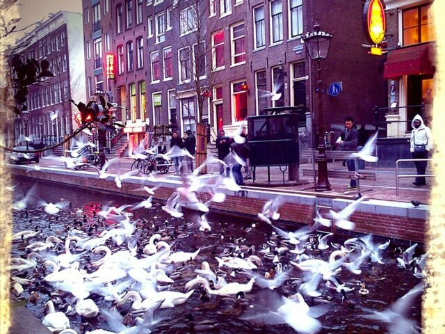 Feeding the swans in the Red Light District